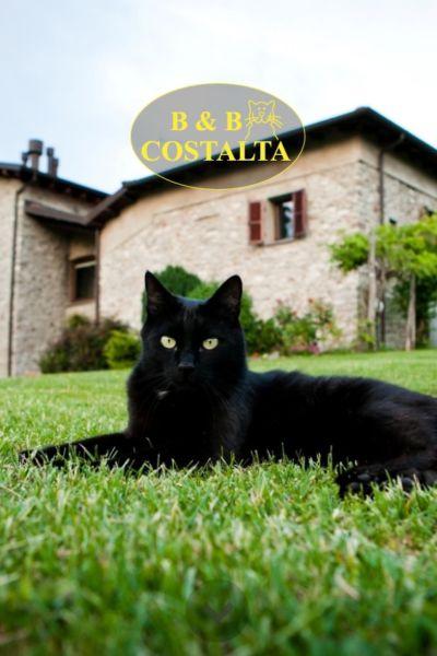Costalta