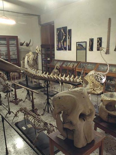 Museo storia naturale Parma