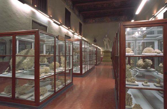 Museo storia naturale di Parma