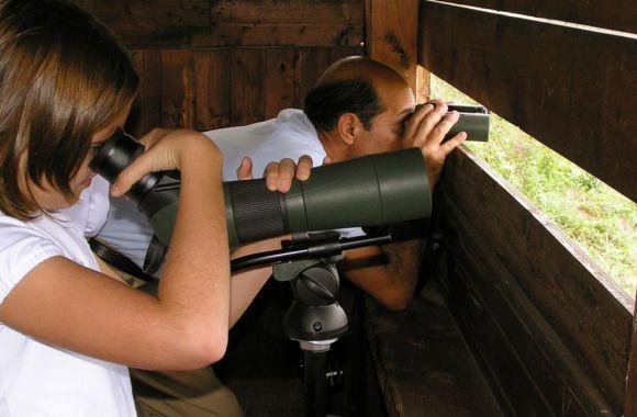 Oasi Lipu Torrile birdwatching