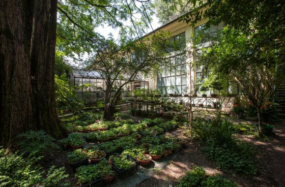 Orto botanico serra