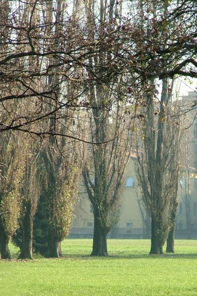 Parco Falcone Borsellino