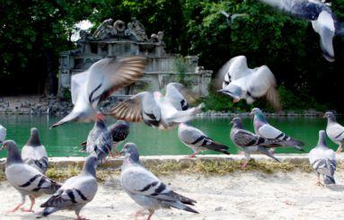 Parco Ducale laghetto