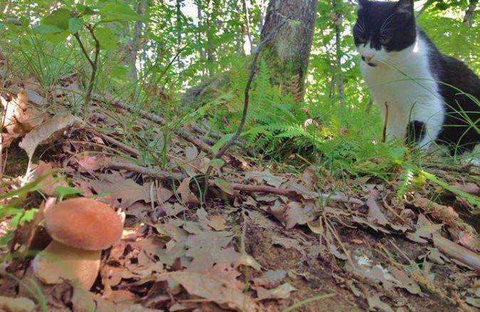Un porcino tra le foglie nel bosco