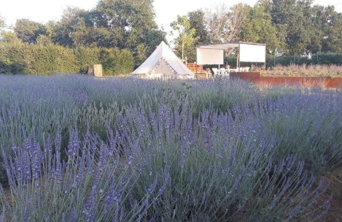 Agricampeggio Giardino Lilla
